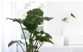 Kamerplanten kopen