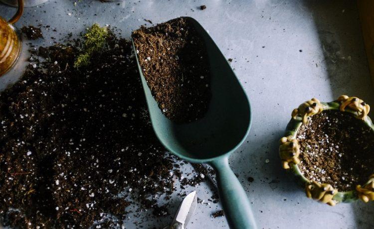 Je tuin een make-over geven? Dit zijn de beste tips!