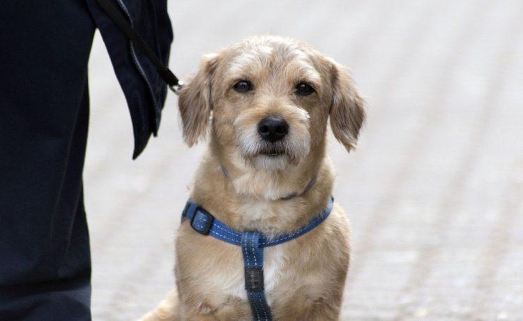Kan mijn hond giardia op een mens overbrengen
